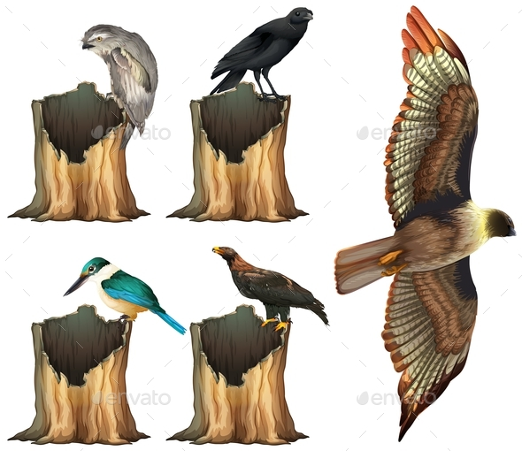 Wild Birds on Log - Miscellaneous Conceptual