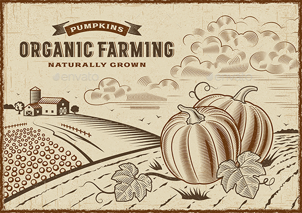Pumpkin Organic Farming Landscape - Landscapes Nature