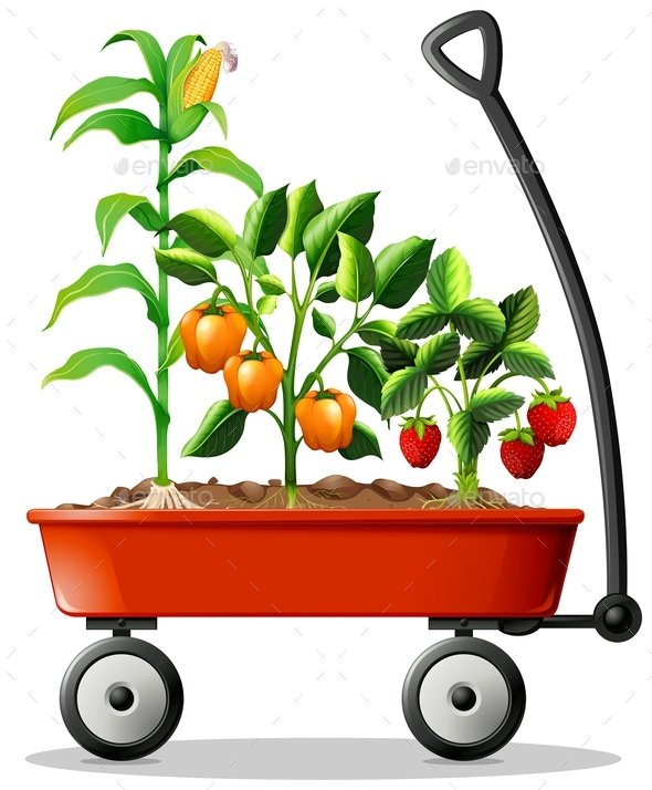Fresh Vegetables and Fruits in the Cart - Flowers & Plants Nature