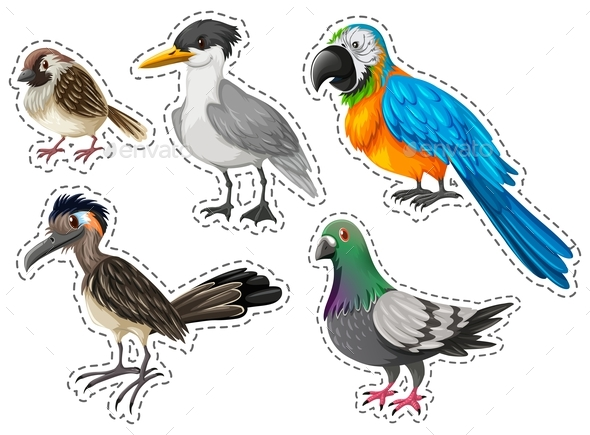 Different Types of Wild Birds - Animals Characters