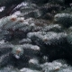 Snow Falling on Branches of Pine Tree - VideoHive Item for Sale