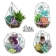 Succulents and Crystals - GraphicRiver Item for Sale