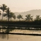 Beautiful View of Flooded Rice Paddy Field with a Road During Sunrise in India - VideoHive Item for Sale