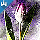 Pencil n Watercolor Photoshop Action - GraphicRiver Item for Sale