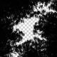 Tree Silhouettes - Low Angle Shot - VideoHive Item for Sale
