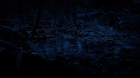 Rain Hitting Pool In The Forest At Night by RockfordMedia VideoHive