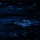 Shallow Forest Pool In Rainfall At Night - VideoHive Item for Sale