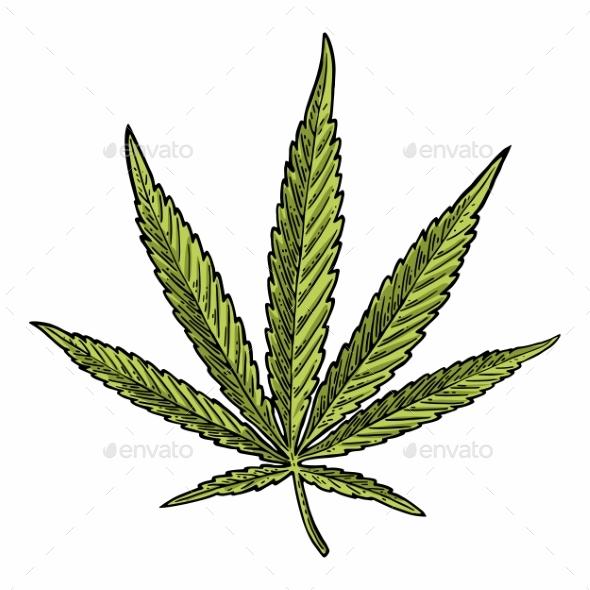Marijuana Leaf - Flowers & Plants Nature