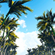 Forest Consisting Of Palm Trees - VideoHive Item for Sale