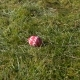Pink Egg on Green Grass