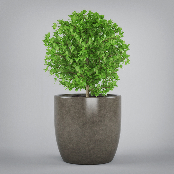 Potted Plant - 3DOcean Item for Sale