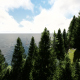 Island and Forest - VideoHive Item for Sale