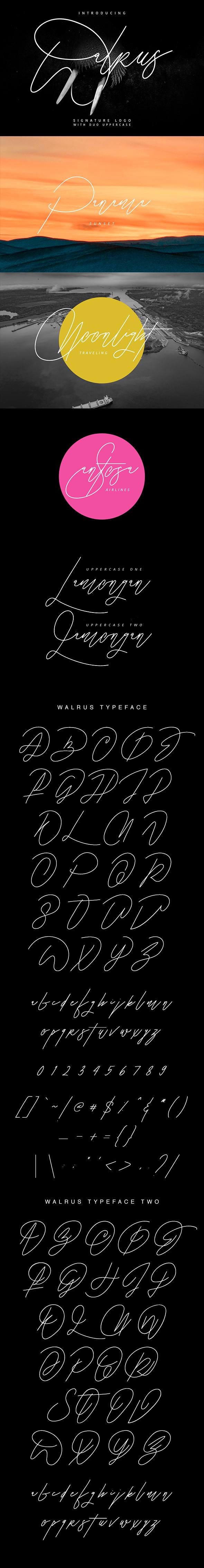 Walrus Signature Font - Hand-writing Script