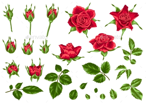 Set of Decorative Red Roses - Flowers & Plants Nature
