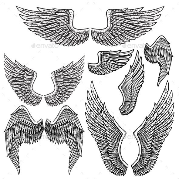 Set of Monochrome Bird Wings of Different Shape - Animals Characters