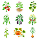 Growing Agricultural Plants Icons Vector Set - GraphicRiver Item for Sale