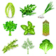 Green Vegetables and Spices Icons Vector Set - GraphicRiver Item for Sale