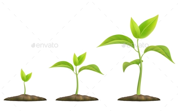 Growing Green Sprout - Flowers & Plants Nature