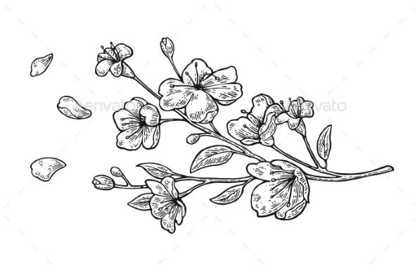 Sakura Blossom - Flowers & Plants Nature