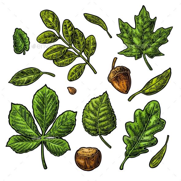 Acorn and Chestnut Set - Flowers & Plants Nature