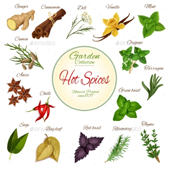 Hot Spice, Herb and Condiment Poster Design - Food Objects