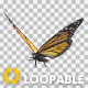 Flying Butterfly - North American Monarch - VideoHive Item for Sale
