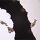 Microscopy: Rotifer Mniobia Magna on a Microscopic Larva 02 - VideoHive Item for Sale