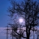 Sunrise on a Winter Morning - VideoHive Item for Sale