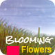 Romantic Photo Gallery - Blooming Flowers - VideoHive Item for Sale