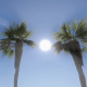 PalmTrees and Sun Background - VideoHive Item for Sale