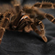 Spider on Black Сloth - VideoHive Item for Sale