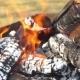 Bonfire Wind Trees Fire