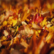 Passing Colorful Fall Leaves Macro - VideoHive Item for Sale