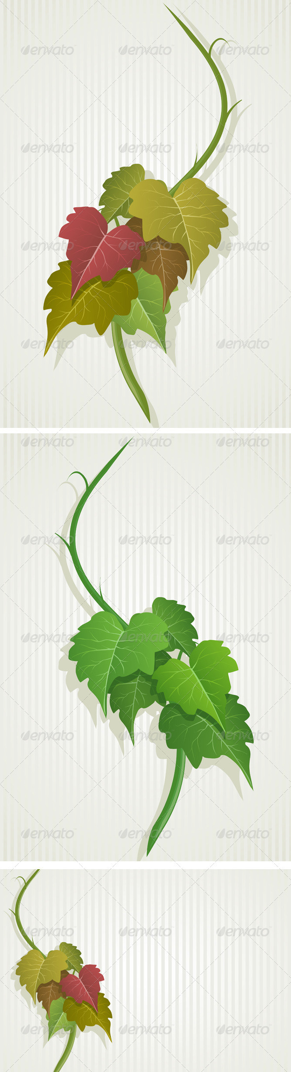 Green Grape Leaves - Flowers & Plants Nature