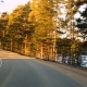 Front View From Driving Car on Road in Pine Tree Forest