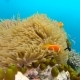 Ocean Scenery on Shallow Coral Reef. Underwater Video of the Ocean. Small Fish Swim Erratically and