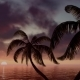Palm Trees At Dawn of Day - VideoHive Item for Sale