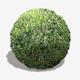 Dense Forest Floor Seamless Texture - 3DOcean Item for Sale