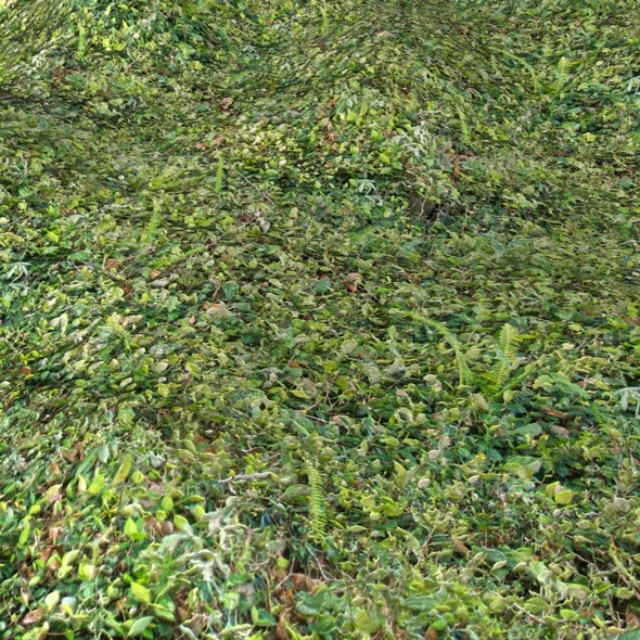 Dense Forest Floor Seamless Texture by