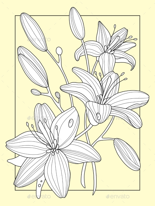 Lily Flowers Hand Drawn Vector Illustration - Flowers & Plants Nature