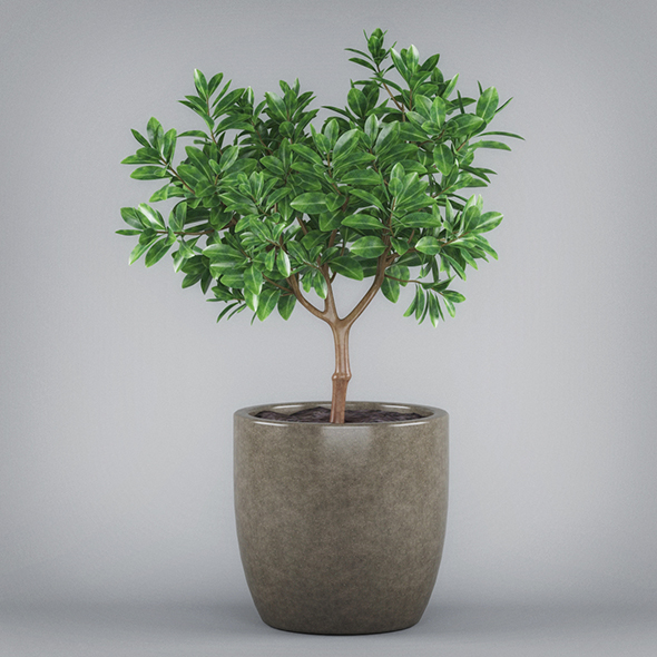 Potted Bonsai Tree - 3DOcean Item for Sale