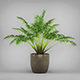 Potted Kentia Palm Plant - 3DOcean Item for Sale