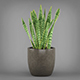 Potted Tropical Snake Plant - 3DOcean Item for Sale