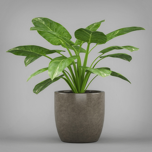 Potted Arrowhead Plant - 3DOcean Item for Sale