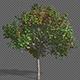 Growing Seasons Tree - VideoHive Item for Sale