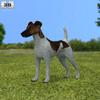 Fox terrier smooth 590 0001.  thumbnail