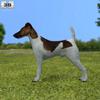 Fox terrier smooth 590 0002.  thumbnail