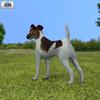 Fox terrier smooth 590 0003.  thumbnail