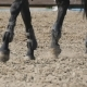 Foot of Horse Running on the Sand.  of Legs of Stallion Galloping on the Wet Muddy Ground.