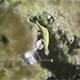 Microscopy: Uroleptus Piscis 01 - VideoHive Item for Sale
